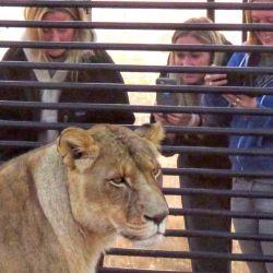 Los 77 felinos de esta reserva provienen de ambientes de cautividad o de zoológicos cerrados.