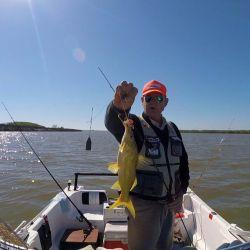 Como es nuestra costumbre y es sabido, en la variedad de carnadas también está el éxito de la pesca.