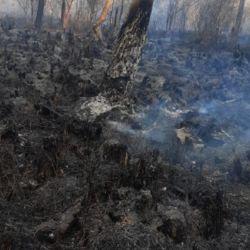 Sigue habiendo algunos principios de fuego que ponen en serio peligro a más de 8 hectáreas de vegetación
