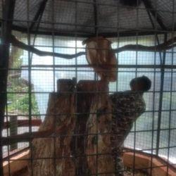 Tras ser rescatado, lo trasladaron al Jardín de Los Pájaros de la Capital del Monte.