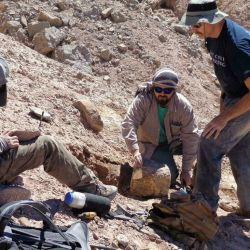 Todos los fósiles hallados están conservados en tres dimensiones y en perfecto estado.