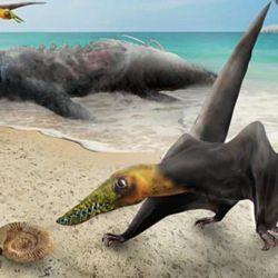 Imágen ilustrativa del pterosaurio hallado que habitó en esa zona del norte de Chile durante el periodo Jurásico, hace unos 160.000.000 de años.