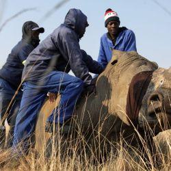 El gobierno sudafricano busca ponerle coto a la caza furtiva de los rinocerontes y a la venta de sus preciados cuernos en el mercado negro.