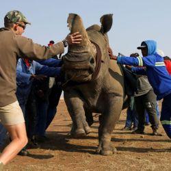 La mayor parte de la caza furtiva de rinocerontes ocurre en los parques de caza estatales de Sudáfrica.