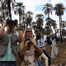 En las cercanías de la ciudad de Colón (Entre Ríos), el Parque Nacional El Palmar, propone una actividad que cada día atrae a más personas que buscan acercarse a la naturaleza.