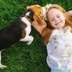 El Beagle es de los perros más juguetones del mundo.