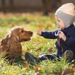 Es necesario sacarlos a pasear y jugar con ellos varias veces por día