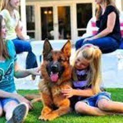 Les encanta pasar la mayor cantidad de tiempo posible jugando con los integrantes de su familia