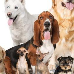 Por naturaleza, hay perros más juguetones que otros.