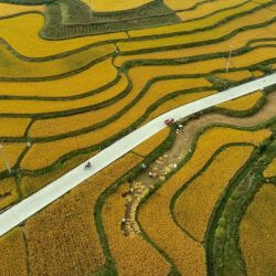 Vista aérea de agricultores cosechando arroz con cáscara, en la aldea de Jinpi del municipio de Wantanhe, en el suroeste de China. | Foto:Xinhua / Long Yi