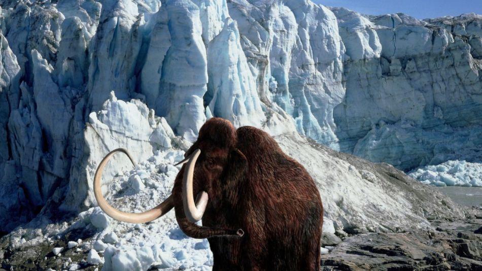 Empresa de genética busca recrear un mamut