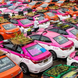 En la foto se observan huertos en los techos de los vehículos de una empresa de alquiler de taxis, cuyos coches están actualmente fuera de servicio debido a la caída del negocio como consecuencia de la pandemia del coronavirus Covid-19, en Bangkok.   Foto:Jack Taylor / AFP