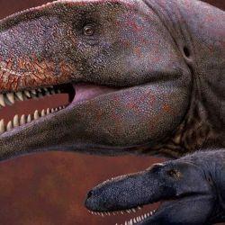 El dinosaurio hallado es el doble de largo y más de cinco veces más pesado que el tiranosaurio.