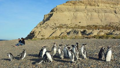 Chubut: Punta Tombo vuelve a recibir visitantes