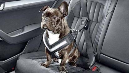 ¿Cómo tienen que viajar las mascotas en los autos?