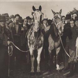 Los caballos Gato y Mancha inscribieron sus nombres en la historia mundial equina.