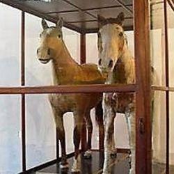 Actualmente, Gato y Mancha se encuentran embalsamados y están exhibidos en el Museo de Transportes del Complejo Museográfico Provincial