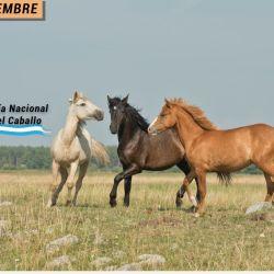 Desde 1999, cada 20 de septiembre el caballo argentino tiene su merecido homenaje.