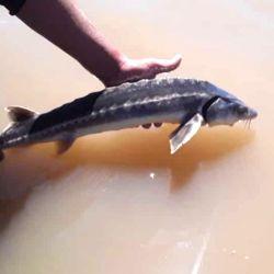 La captura se desarrolló el martes 21 de septiembre, sobre el río Coronda.