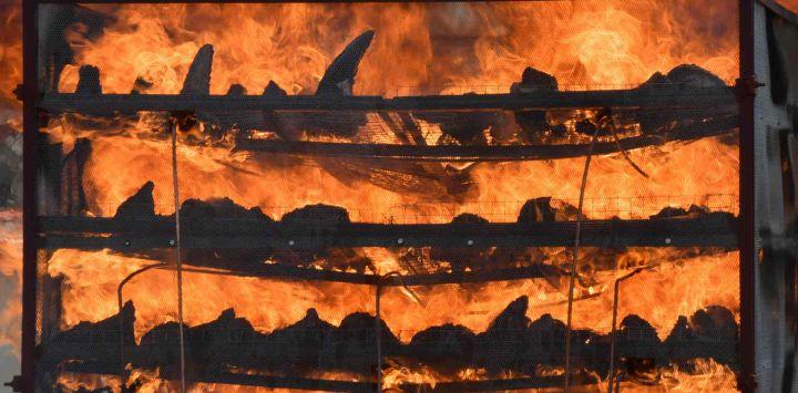 Cuernos de rinoceronte incautados arden en un horno en una campaña contra la caza furtiva para conmemorar el Día Mundial del Rinoceronte cerca del Parque Nacional Kaziranga en Bokakhat.