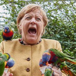 La canciller alemana, AngelaMerkel, reacciona mientras alimenta a los loritos en el Parque de las Aves en Marlow, en el norte de Alemania.  | Foto:AFP