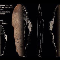 Entre los fragmentos óseos también estaba escondida la punta de un diente de ballena o delfín con marcas consistentes.