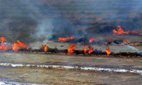 Bosques incendiados