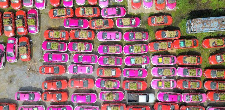 Vista aérea de taxis utilizados para cultivar verduras en un estacionamiento, en Bangkok, Tailandia. Trabajadores de la empresa de taxis apiló tierra en el techo y en el capó de estos automóviles para cultivar verduras y distribuirlas a los trabajadores y los conductores desempleados.