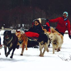 Tierra del Fuego es la meca nacional de los paseos en trineo tirados por perros siberianos.