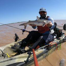 La pesca se dio con muchos piques.
