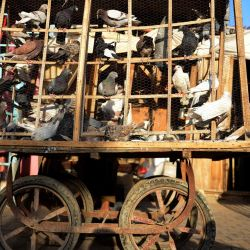 Las palomas se exponen para su venta en una jaula sobre un carro en un mercado de aves en Kandahar. | Foto:JAVED TANVEER / AFP