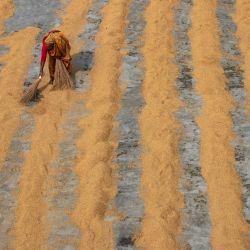 Imagen de una trabajadora volteando arroz para secar bajo el sol, en el distrito de Munshiganj, en Dhaka, Bangladesh. | Foto:Xinhua/Joy Saha/ZUMAPRESS