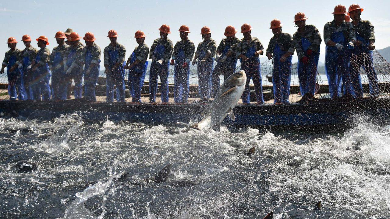 Trabajadores cosechan peces con una gran red de pesca en el lago Qiandao, en el este de China. | Foto:Xinhua/Huang Zongzhi