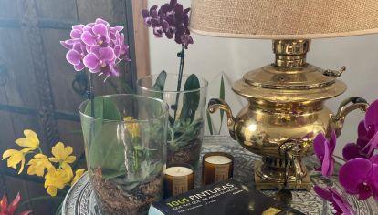 Deco con Plantas y Flores 20210930