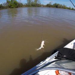Con todo a bordo y con el grupo familiar con los chalecos salvavidas puestos, salimos río abajo en busca primeramente de algunos pesqueros.