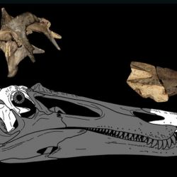 Habitaron el territorio de Gales durante el período Cretácico Temprano, entre hace entre unos 200 a 215 millones de años.