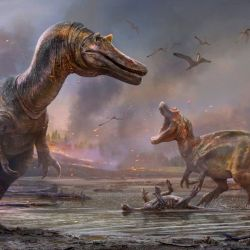 Los especialistas afirman que se tratan de dos especies de dinosaurios carnívoros.