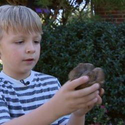Lo que parecía una simple roca terminó siendo el molar fosilizado de un mastodonte.