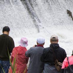 Personas observan una trucha saltando una escala de peces en Port Hope para migrar a las zonas de desove, en el río Ganaraska, Ontario, Canadá. | Foto:Xinhua/Zou Zheng