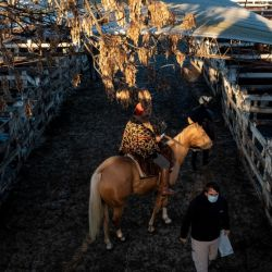 Herdsman Ángel González oversees cattle on horseback. 'More than one of us will shed a tear' when Liniers shuts, said González, 62, who's worked at the market for four decades and whose sons also have jobs there.