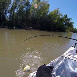 Finalmente, y casi pegado a la embarcación, salió del agua la figura de una hermosísima palometa.