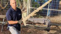 Un buzo israelí encontró una espada de un cruzado de hace 900 años en el fondo del mar Mediterráneo