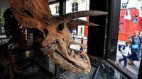 Big John, un triceraptor de 8 metros de largo restaurado 20211021
