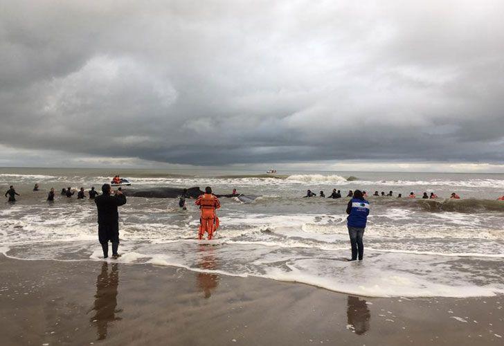 El operativo rescate se realiza mar adentro