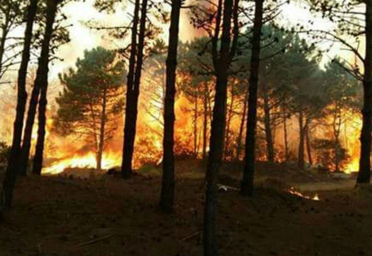 Fuerte incendio se extiende en los bosques de la Costa argentina.