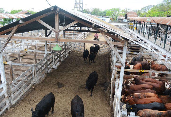 ACTIVIDAD. Allí trabajan 2 mil personas y pasan entre 25 y 30 mil cabezas de ganado por semana. Lo mudarían cerca del Mercado Central.