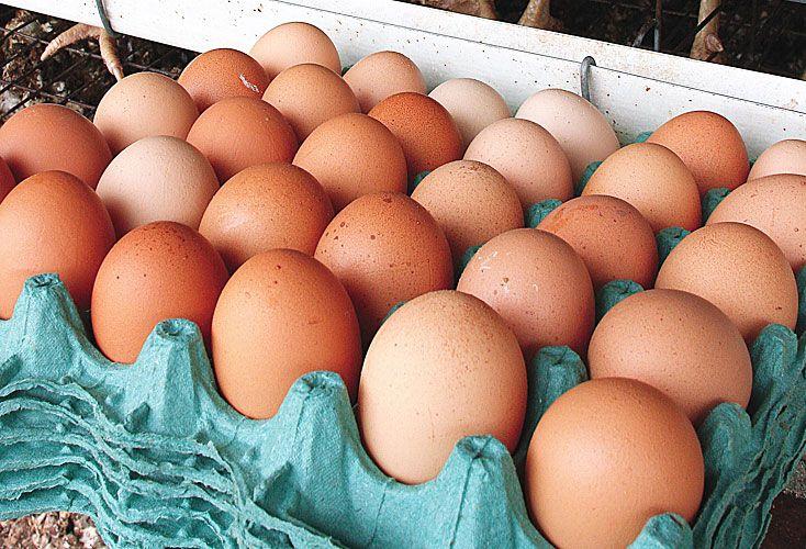 Escaso. No hay tantos insumos para producir más pollos.