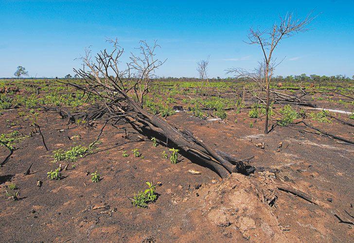 Desierto. Se registran 106 millones de hectáreas afectadas por procesos de erosión.