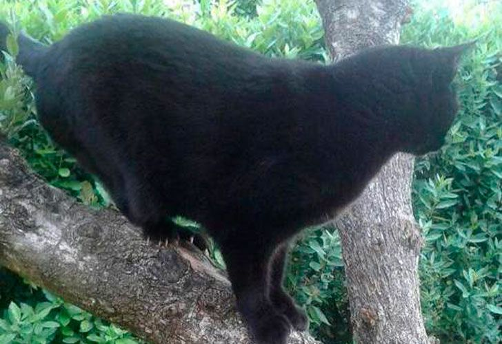 Fiocco o Tequila, el gato bígamo que conmueve a Italia