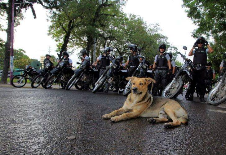 Atropellaron a Mariscal, el perro que custodiaba la Casa de Gobierno de Chaco